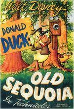 Affiche Le Vieux Séquoia