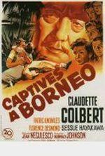 Affiche Captives à Bornéo