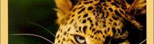 Couverture Le Quark et le Jaguar