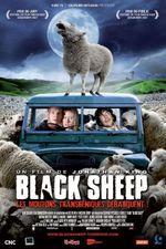 Affiche Black Sheep