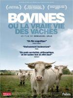 Affiche Bovines