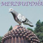 Pochette Merzbuddha