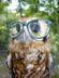 Avatar Owl