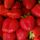 Avatar fraise