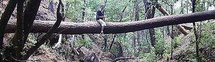 Illustration Top Films d'arbre transformé en pont