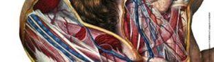 Illustration Extrême cinéma 2011: L'hôpital et ses fantasmes