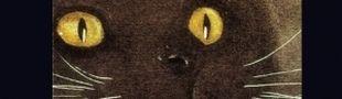 Illustration The eye of tiger, quand Ocha pose sa griffe dans mes séances cinéma.