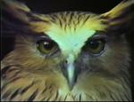 Affiche An Owl is an Owl is an Owl
