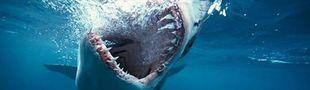Cover Le requin, source d'inspiration pour films de merde.