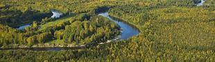 Cover Dans les forêts de sibérie