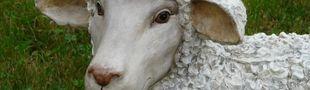Illustration Jeux donnés en pâture aux moutons de poussière