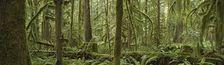 Cover Un requiem de forêts