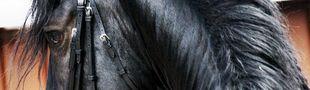 Cover Les films avec des chevaux dedans