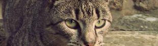 Cover La bibliothèque des chats
