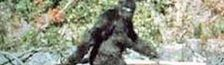Cover Pour tous ceux qui croient que Bigfoot, Sasquatch ou Yéti, ça n'existe pas !