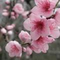 Avatar Fleurs