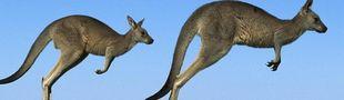 Cover Le cinoche au pays des Kangaroos et des Kiwis...