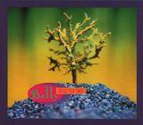 Pochette Feed the Tree (Single)
