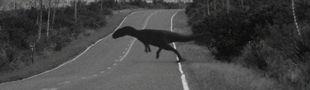 Cover le top des dinosaures : mes sauriens préférés