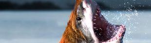 Cover Top de mi-requin, mi-n'importe-quoi