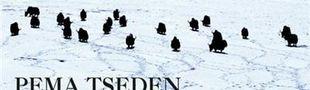 Couverture Neige, nouvelles du Tibet