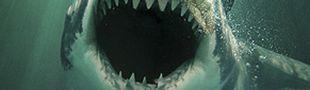 Illustration Les meilleurs nanars de requins