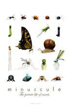 Affiche Minuscule : La Vie privée des insectes