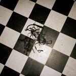 Pochette EP (EP)