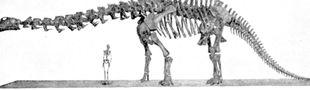 Cover Top  Sauropodes