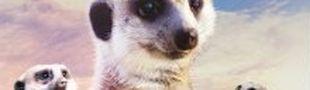 Affiche Le Clan des suricates