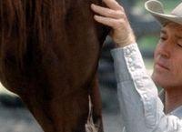 Cover Les_meilleurs_films_sur_les_chevaux