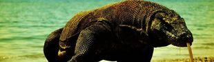 Cover Films de varanus komodoensis