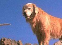 Cover Les_meilleurs_films_ou_le_personnage_principal_est_un_chien