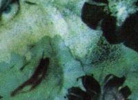 Cover Les_meilleurs_albums_de_The_Cure