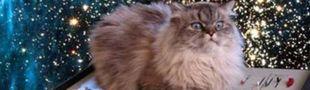 Cover Je regardais des vidéos de chats nazi unijambistes roux mangeurs de tractopelle, et je suis tombée sur leur chaîne