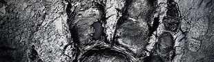 Jaquette Evolve
