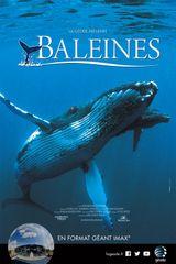 Affiche Baleines