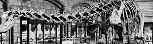 """Cover """"Sa place est dans un musée"""" : Squelettes de dinosaures"""