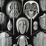Pochette La Marche des Arthropodes (EP)