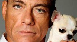 Cover Les meilleurs films avec Jean Claude Van Damme