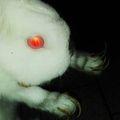Avatar Bunny's Video