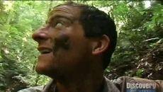 screenshots Le Costa Rica (la forêt tropicale)