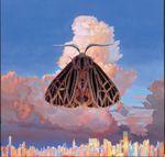 Pochette Moth