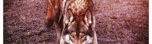 Pochette Wolves (EP)