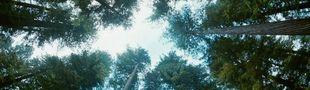 Cover Dans ce film : On contre plonge vers le ciel à travers les arbres.