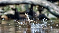screenshots Reptiles & amphibiens