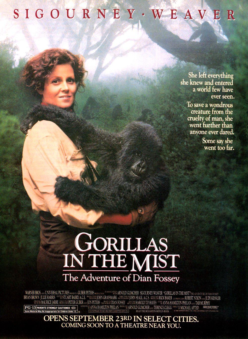 le film gorille dans la brume