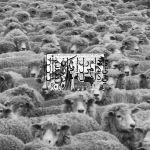 Pochette Grey Sheep II (EP)