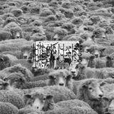 Pochette Grey Sheep II (EP)