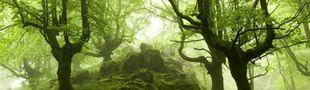 Cover Feuilleter la forêt